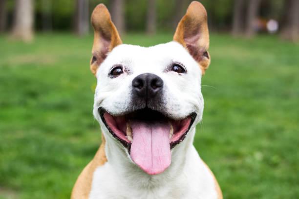 Friendly dog having a big smile picture id1142686411?b=1&k=6&m=1142686411&s=612x612&w=0&h=9oonhsf  dv0spjpgxy 4wio6f1qzmehzrvet9zb79m=