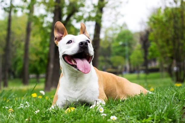 Friendly Dog having a big smile stock photo