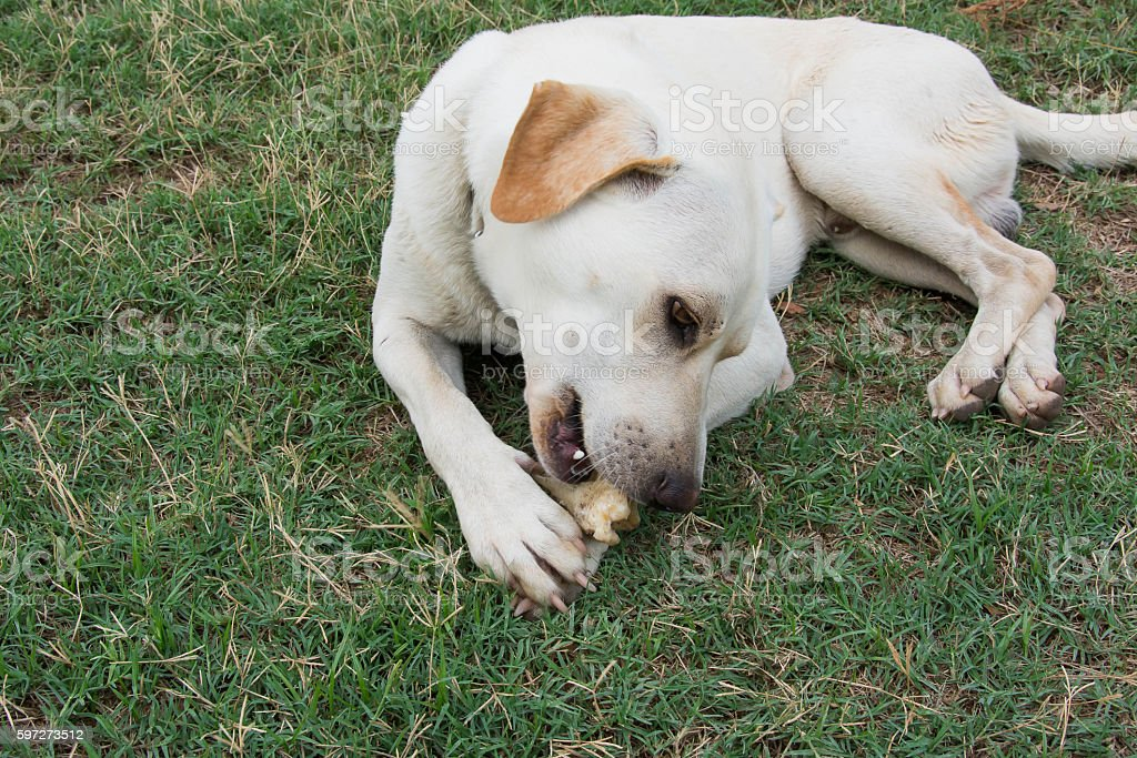 friendly dog nibbling the born on grass ground Lizenzfreies stock-foto