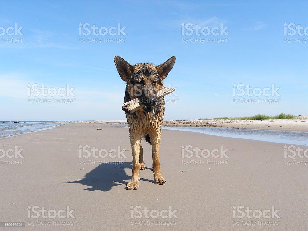 Friendly dog royalty-free stock photo