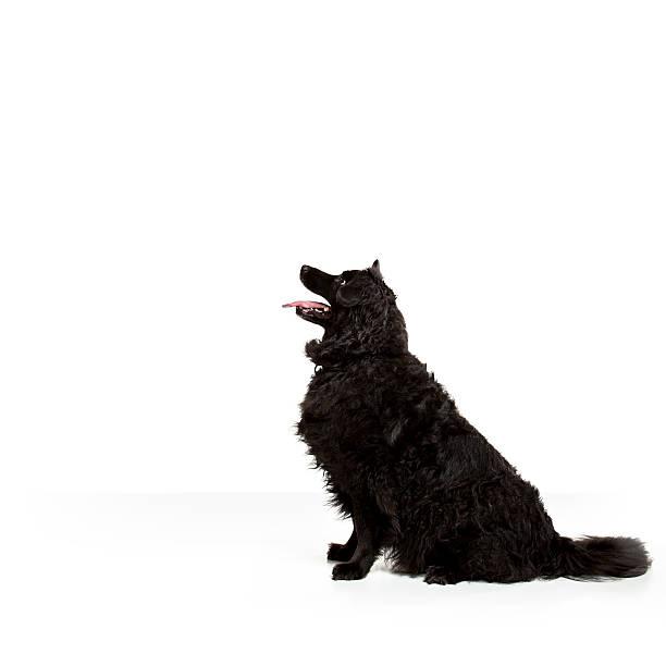 friendly dog portrait stock photo