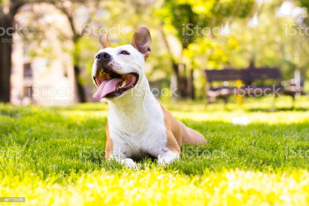 Friendly dog smile stock photo