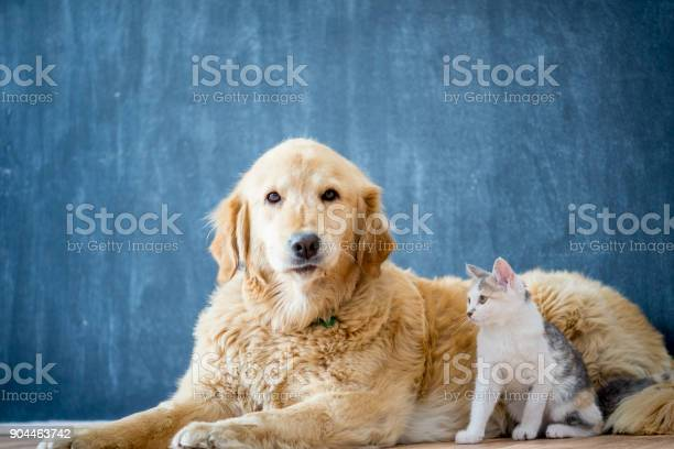 Friendly dog with cat picture id904463742?b=1&k=6&m=904463742&s=612x612&h=xqgdjljzpo3fuilmuecrkv7 gpaywqzbiz2c7wp9mn8=