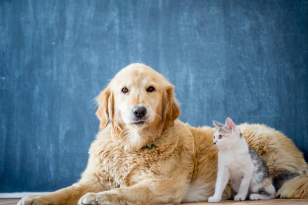 Friendly dog with cat picture id904463742?b=1&k=6&m=904463742&s=612x612&w=0&h=hj4kvw69gaeb2isywtosdqlr9mrmfl9q5ggdb5atpts=