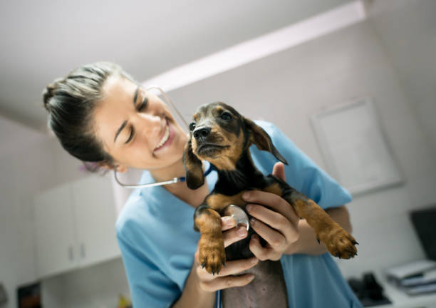 Friendly female veterinarian listening to a baby dogs heart with a picture id918369138?b=1&k=6&m=918369138&s=612x612&w=0&h= s4gjtldetxm3mvmflqclmesczu9i43vwbaifxkay1y=