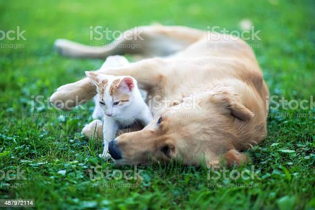 Friendly hug picture id487972114?b=1&k=6&m=487972114&s=612x612&h=vis9dshxbyhmt89vvimn8gqxebpwny meodydpkuemy=