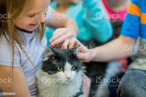 Friendly kitty picture id700448444?b=1&k=6&m=700448444&s=612x612&h=sw8pkbwbonlfvgxer386rb2omaw9xthve03jb7nkcjk=