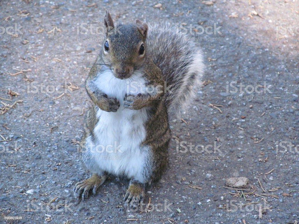 Friendly Squirrel royaltyfri bildbanksbilder