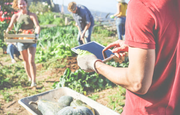 friendly team harvesting fresh organic vegetables from the community greenhouse garden and planning harvest season on a digital tablet - focus on man glove hand - healthy lifestyle and summer concept - mercato luogo per il commercio foto e immagini stock