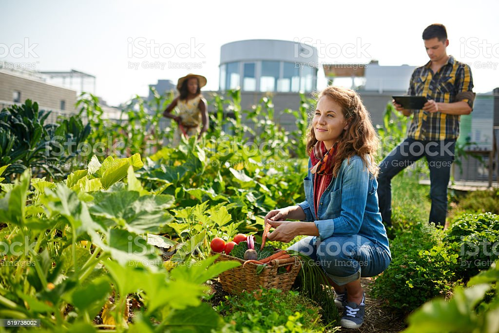 Friendly team harvesting fresh vegetables from the rooftop greenhouse garden