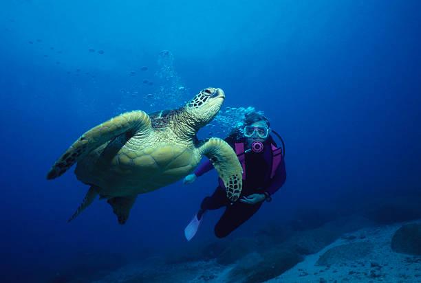 Freundliche Turtle – Foto