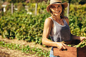 istock Friendly woman harvesting fresh vegetables from farm 1041925848