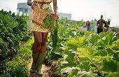 フレンドリーな女性の収穫新鮮な野菜、屋上庭園からの温室