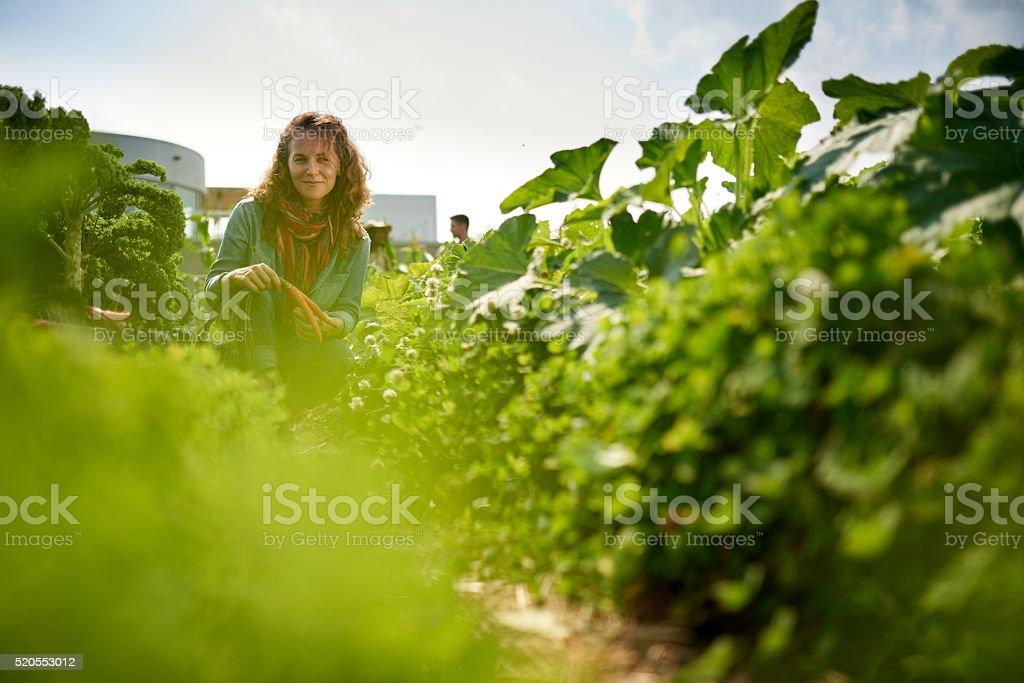 Freundliche Frau ernten frischem Gemüse aus dem Dach