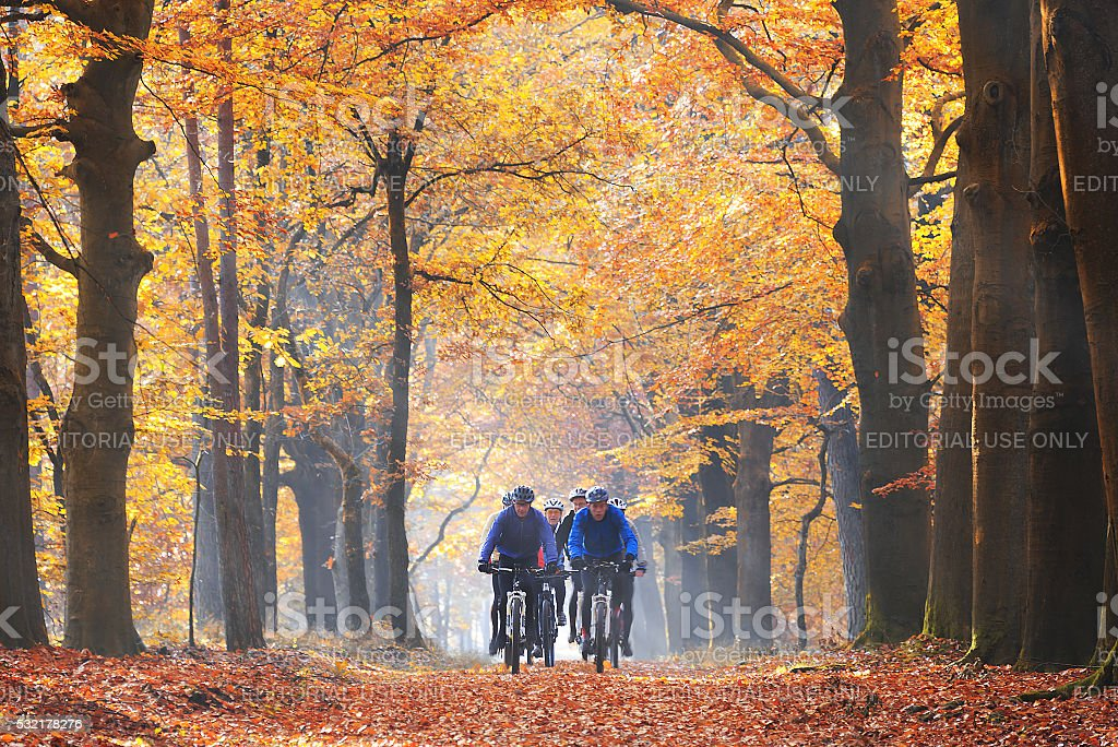 Friends cycling in the forest in autumn stock photo
