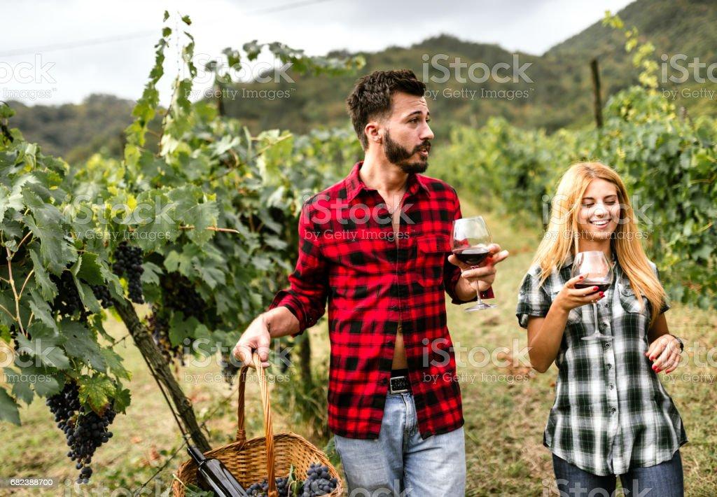 vrienden doen een wijnproeverij in de wijngaard royalty free stockfoto
