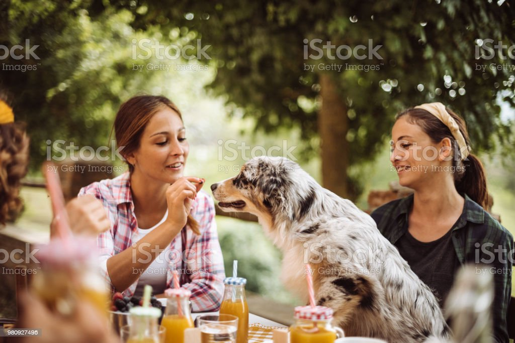 friends doing a lunch in the farm villa stock photo