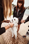 istock friends give caress to the dog 1185509612
