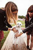 istock friends give caress to the dog 1185509675