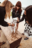 istock friends give caress to the dog 1185509723