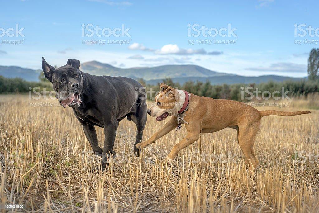 Friends having fun royalty-free stock photo