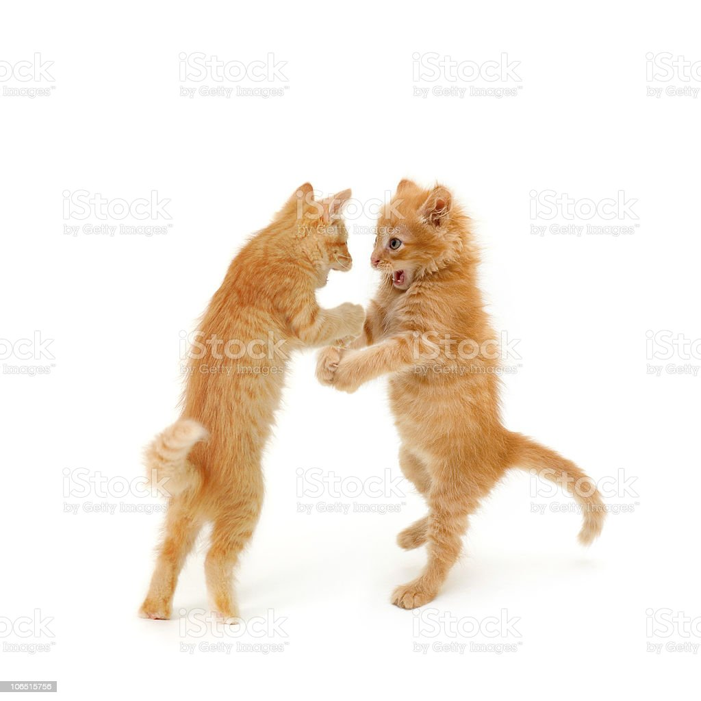 friends kittens royalty-free stock photo