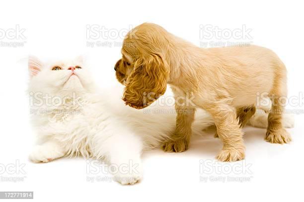 Friends picture id172771914?b=1&k=6&m=172771914&s=612x612&h=eb4t97k58 ndpuiqqgundemvjcmokagcq87ocdablbo=
