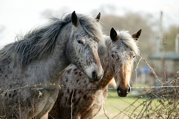 Friends Siblings appaloosa stock pictures, royalty-free photos & images