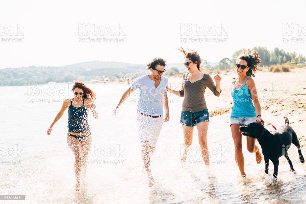 お友達犬とビーチを走る ロイヤリティフリーストックフォト