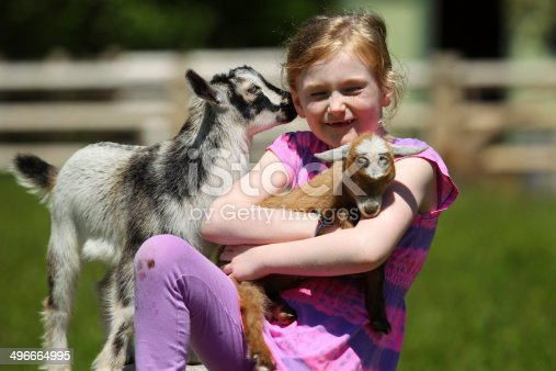 Seven-Year girl and baby goats at the farm.
