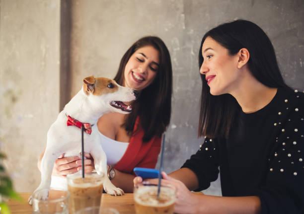 Friends sitting in cafe restaurant and enjoying with their dog picture id1075615916?b=1&k=6&m=1075615916&s=612x612&w=0&h=3nhxbixwiaf5iffbeu0eq7cvqffgj qx8dyt5no56yy=