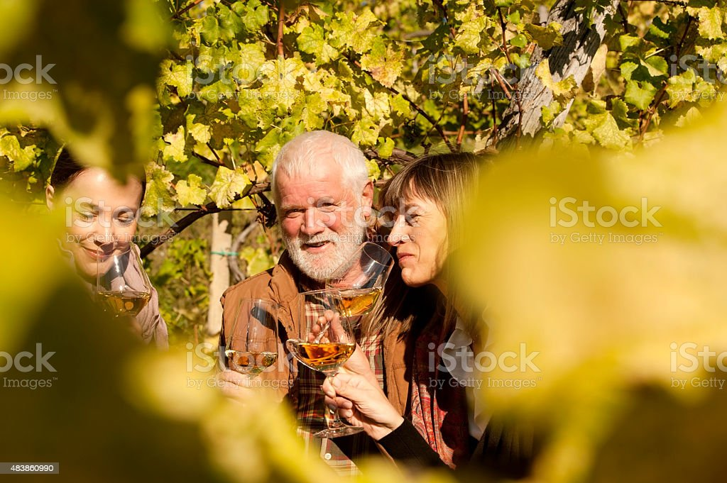 Friends Tasting and Drinking White Wine in Vineyard stock photo