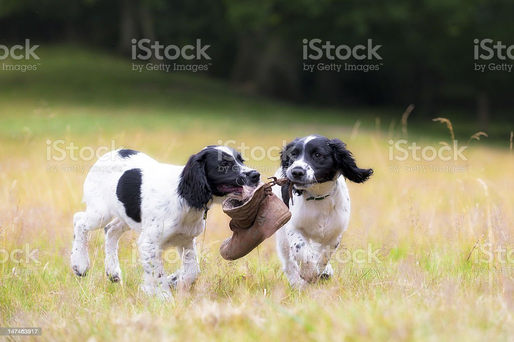 friendship and fun royalty-free stock photo
