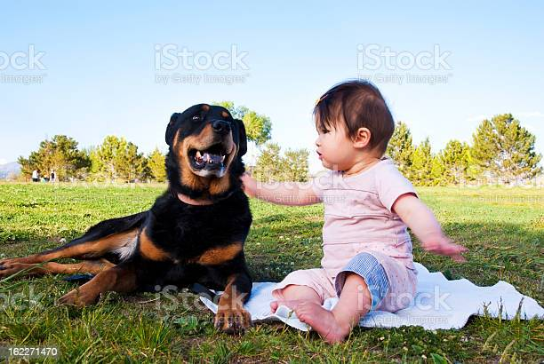 Friendship between dog and baby picture id162271470?b=1&k=6&m=162271470&s=612x612&h=buazloq j7prf er1cmuylafoapfeosj 2e0yyal7os=