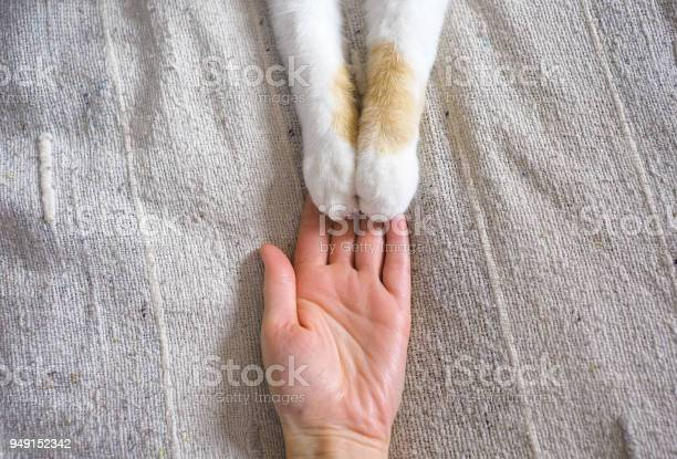 Friendship between human and cat paws are on the hand picture id949152342?b=1&k=6&m=949152342&s=612x612&h=tosy 4mq40xbbouwydzftc0 3v2eds7ympvz5zqnyd8=