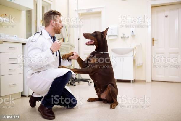 Friendship between veterinarian and dog picture id964292474?b=1&k=6&m=964292474&s=612x612&h=vixh8xyhlwuyznct1ud5w9nlbqjseuqs6iro3adjzni=