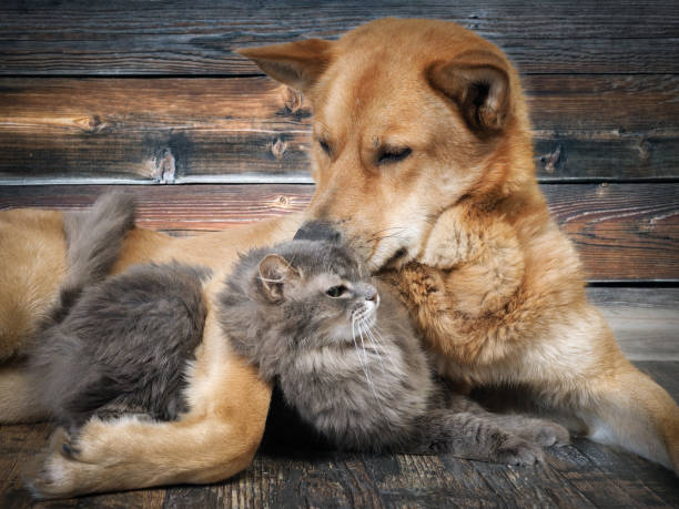Friendship cats and dogs picture id922527350?b=1&k=6&m=922527350&s=612x612&w=0&h=y58r7ndy z03debmkxg4lse0lwgaupru6ifjqqdmpmk=