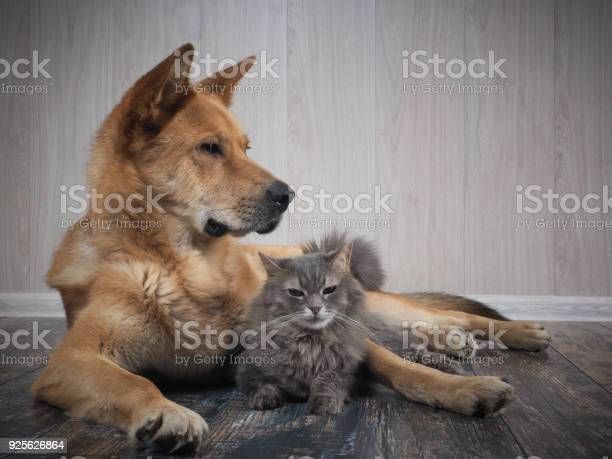 Friendship dogs and cats picture id925626864?b=1&k=6&m=925626864&s=612x612&h=b8ywalw xm45r5pw4g2bloevaa2ov65kjoxs3uyp1wi=