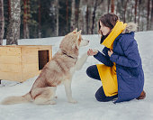 istock friendship of a girl and a sled dog 947377418