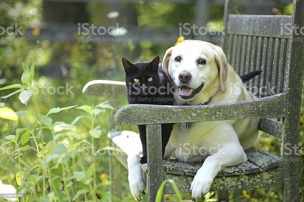 Freundschaft - Lizenzfrei Blumenbeet Stock-Foto