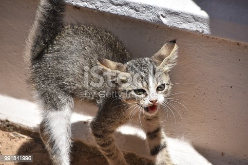 A frightened cat