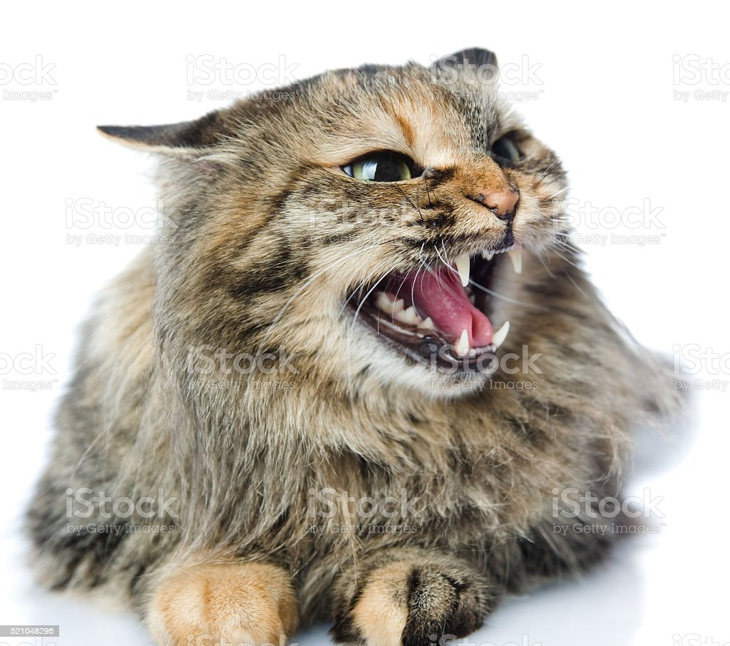 Frightened kitten lying in front. stock photo