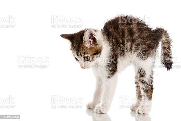 Frightened kitten picture id165240090?b=1&k=6&m=165240090&s=612x612&h=oim1cc5cfnvolzmfba375teta17u8eotzi82wd1g7ao=
