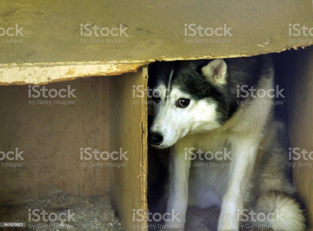 frightened stray dog foto