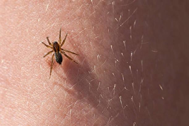 effrayant araignée sur la peau de vos mains. - araignée photos et images de collection