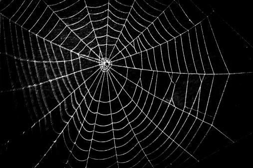 Frightening spider web for Halloween