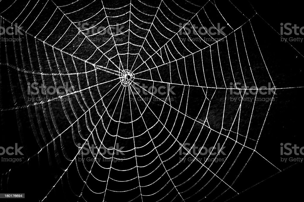 Frightening spider web for Halloween stock photo