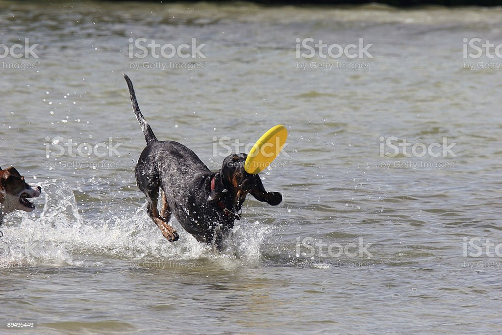 Frisbee foto stock royalty-free