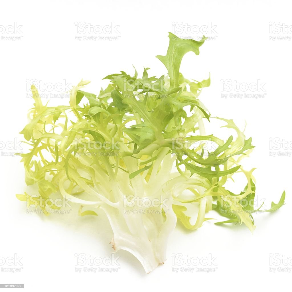 Frisee leaf stock photo