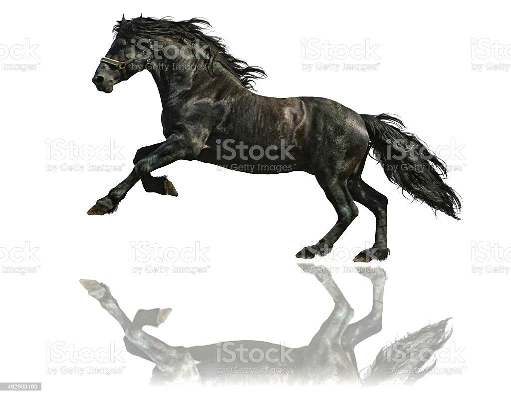 Fryzyjski Koń ogier-na białym tle – zdjęcie